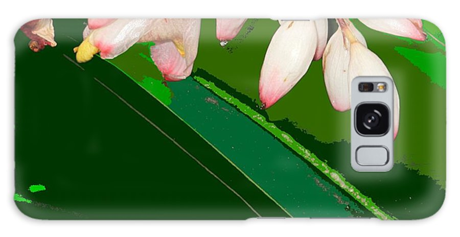 Flowers Galaxy Case featuring the photograph Romney White by Ian MacDonald