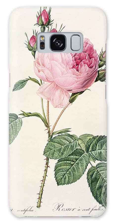 Rosa Galaxy S8 Case featuring the drawing Rosa Centifolia by Pierre Joseph Redoute