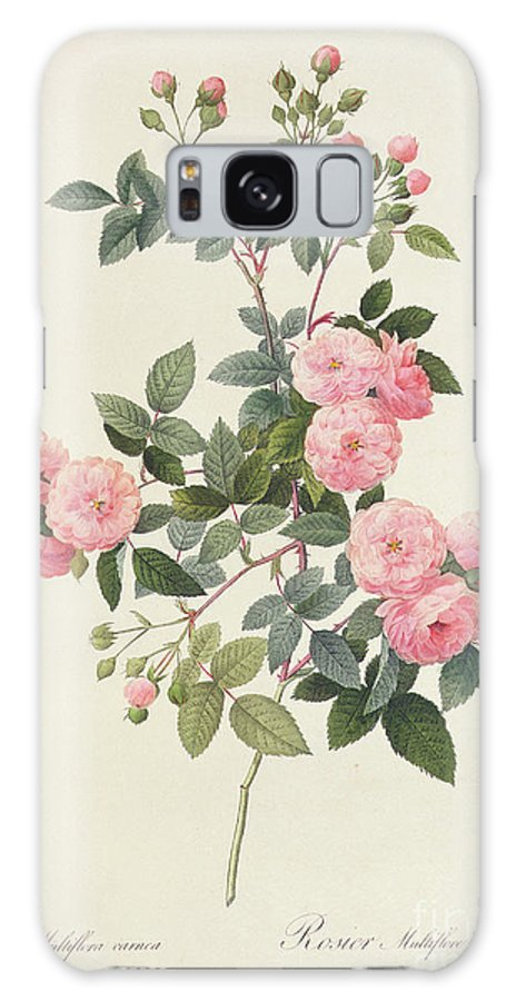 Rosa Galaxy S8 Case featuring the drawing Rosa Multiflora Carnea by Pierre Joseph Redoute