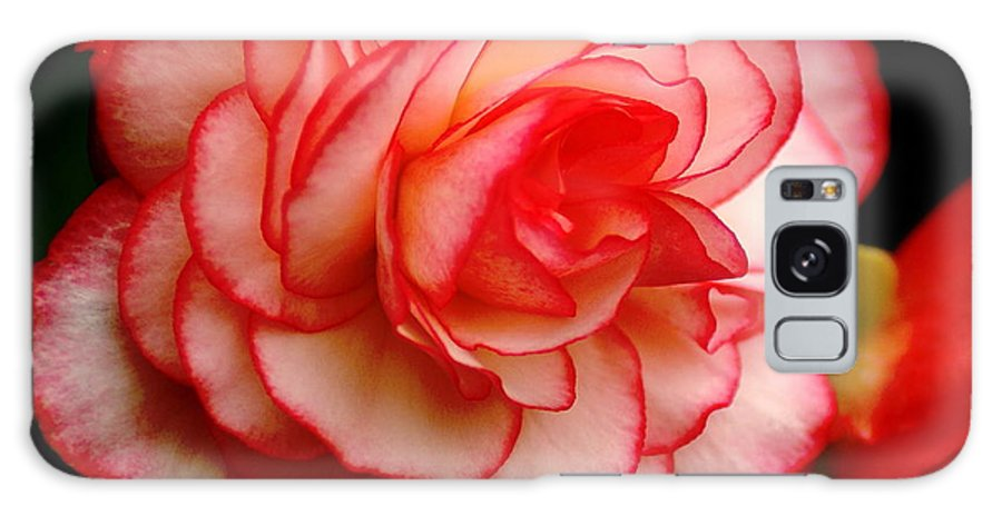 Flowers Galaxy S8 Case featuring the photograph Rose by Ben Upham III