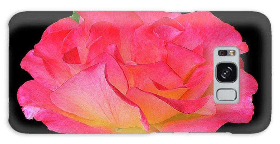 Cutout Galaxy S8 Case featuring the photograph Rose Blushing Cutout by Shirley Heyn