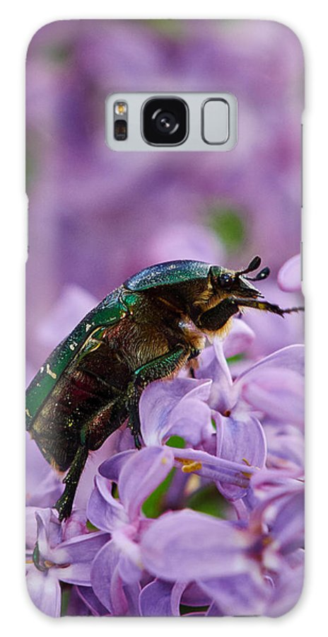 Cetonia Aurata Galaxy S8 Case featuring the photograph Rose Chafer On Lilac by Jouko Lehto