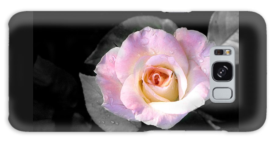 Princess Diana Rose Galaxy S8 Case featuring the photograph Rose Emergance by Steve Karol