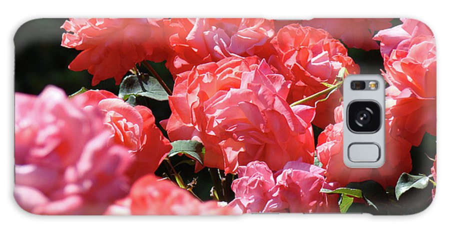 Rose Galaxy S8 Case featuring the photograph Rose Garden Art Prints Pink Red Rose Flowers Baslee Troutman by Baslee Troutman