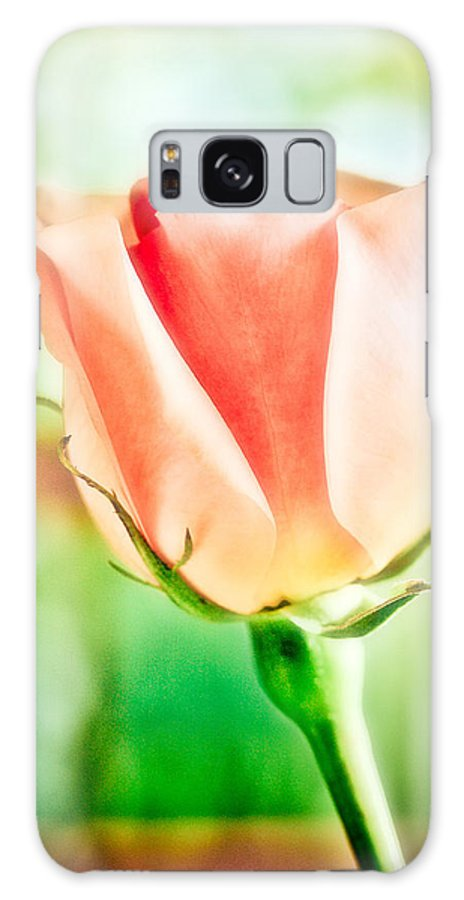 Rose Galaxy S8 Case featuring the photograph Rose In Window by Marilyn Hunt