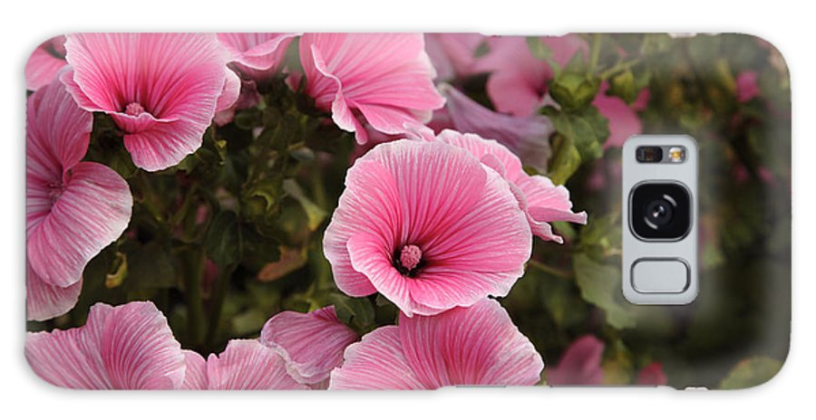 New England Galaxy S8 Case featuring the photograph Rose Mallow Flowers by Erin Paul Donovan