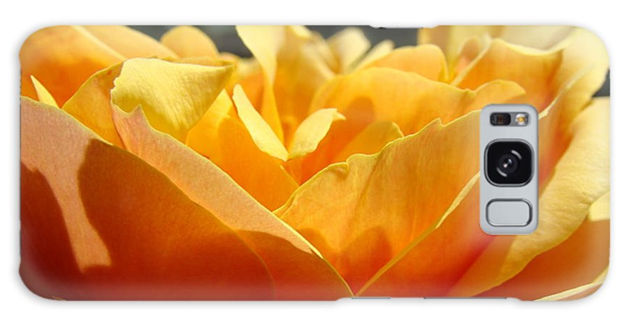 Rose Galaxy S8 Case featuring the photograph Rose Sunlit Orange Rose Garden 7 Rose Giclee Art Prints Baslee Troutman by Baslee Troutman