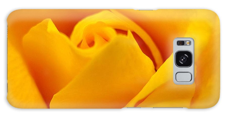 Rose Galaxy Case featuring the photograph Rose Yellow by Rhonda Barrett