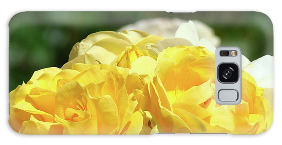 Rose Galaxy S8 Case featuring the photograph Roses Art Prints Canvas Sunlit Yellow Rose Flowers Baslee Troutman by Baslee Troutman
