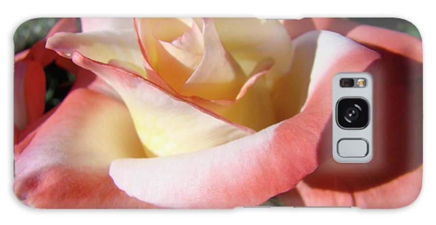 Rose Galaxy S8 Case featuring the photograph Roses Pink Creamy White Rose Garden 5 Fine Art Prints Baslee Troutman by Baslee Troutman