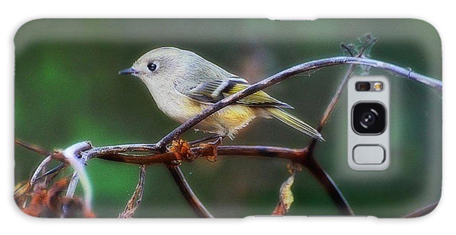 Bird Galaxy S8 Case featuring the photograph Royal Dream by Jennifer Kozlansky