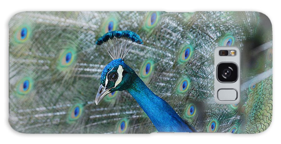 Indian Peacock Galaxy S8 Case featuring the photograph Royal Fowl 4 by Fraida Gutovich