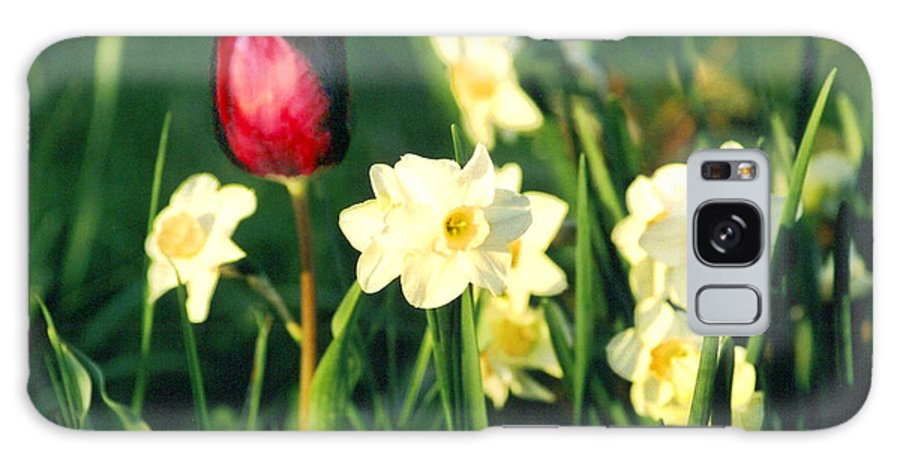 Tulips Galaxy Case featuring the photograph Royal Spring by Steve Karol