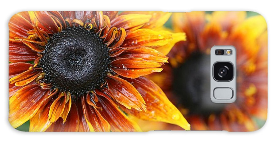 Betsy Lamere Galaxy S8 Case featuring the photograph Rudbeckia - Cherokee Sunset by Betsy LaMere