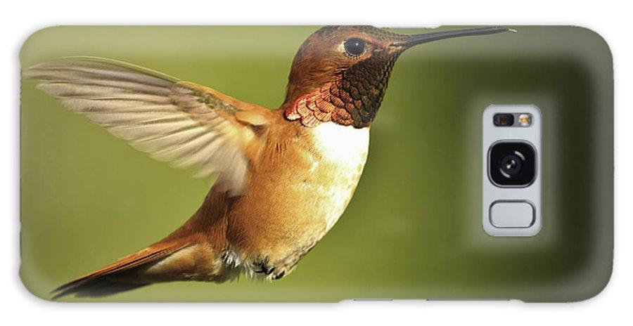 Hummingbird Galaxy S8 Case featuring the photograph Rufous Hummingbird by Tim Hauf