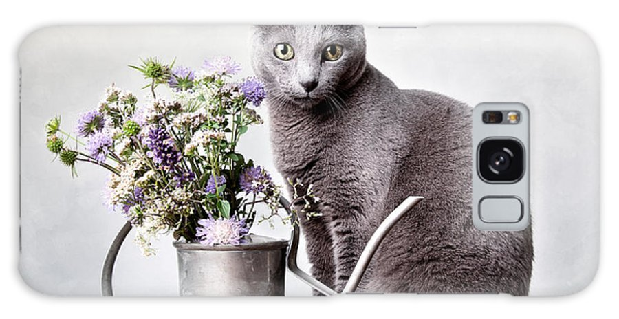 Cat Galaxy S8 Case featuring the photograph Russian Blue 02 by Nailia Schwarz