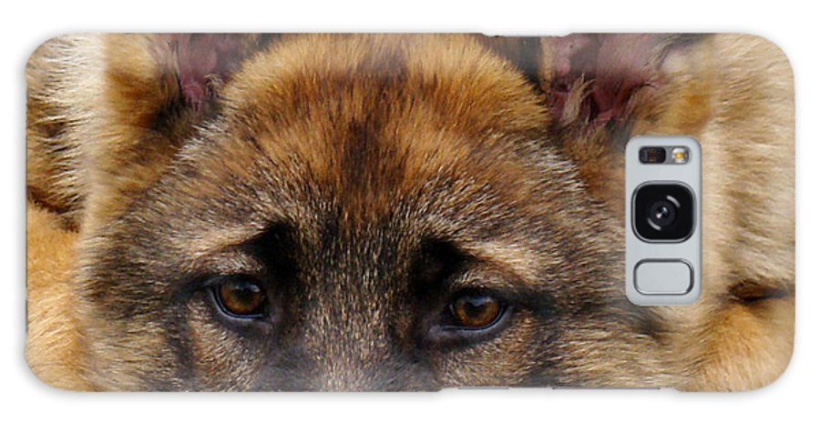 German Shepherd Galaxy S8 Case featuring the photograph Sable German Shepherd Puppy by Sandy Keeton