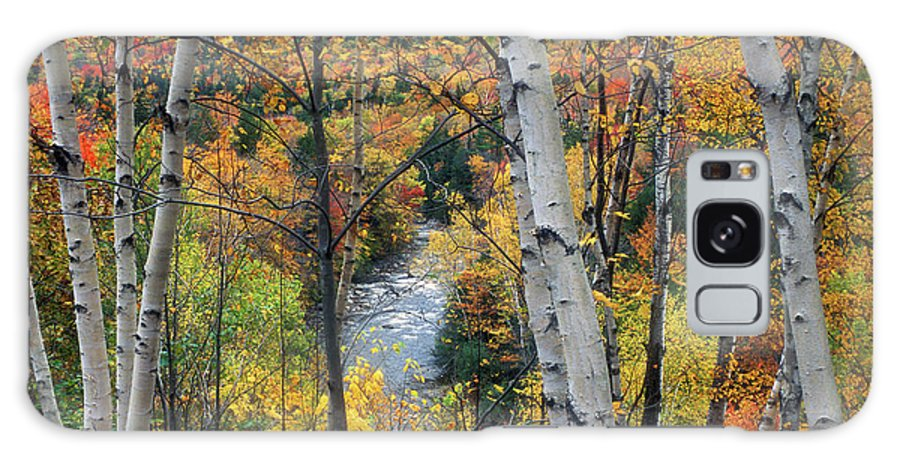 New Hampshire Galaxy S8 Case featuring the photograph Saco River And Birches by John Burk