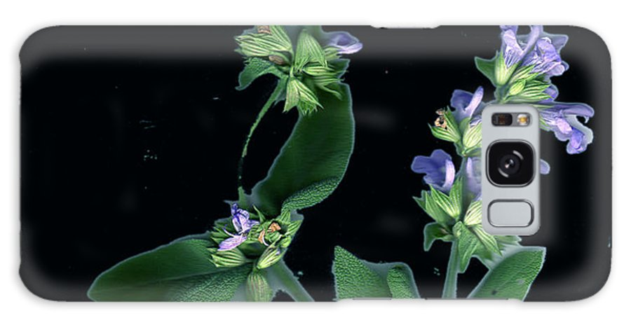 Galaxy S8 Case featuring the photograph Sage Blossom by Wayne Potrafka