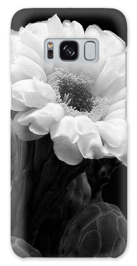 Saguaro Galaxy S8 Case featuring the photograph Saguaro First Bloom by Guy Shultz