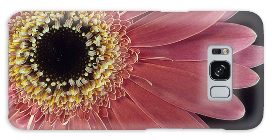 Salmon Gerber Daisy Galaxy S8 Case featuring the photograph Salmon Gerber Daisy by Laurie Paci