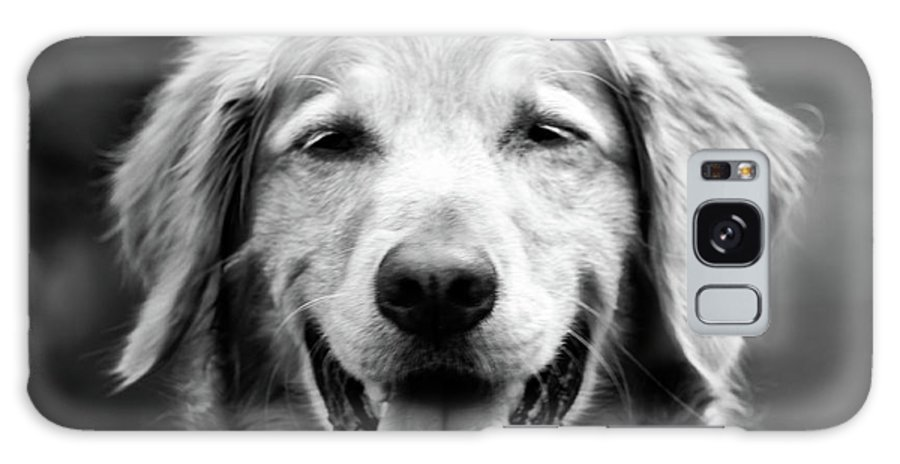 Dog Galaxy S8 Case featuring the photograph Sam Smiling by Julie Niemela