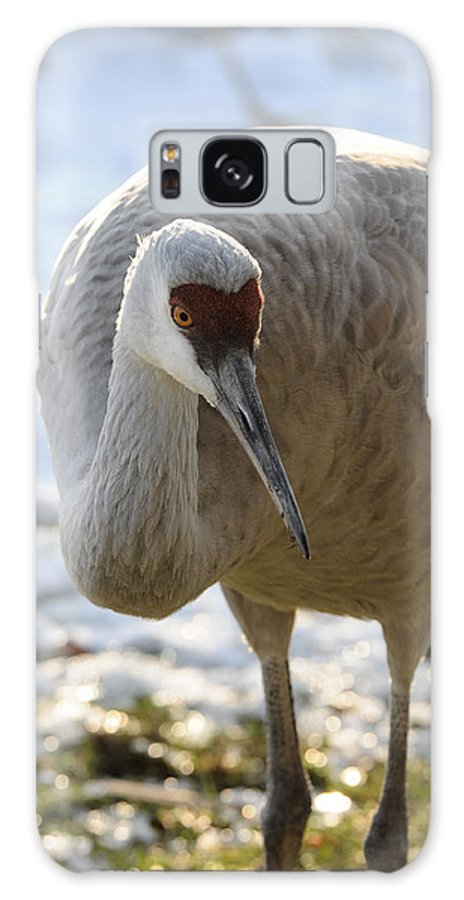 Bird Galaxy S8 Case featuring the photograph Sandhill Crane In Winter by Lawrence Christopher