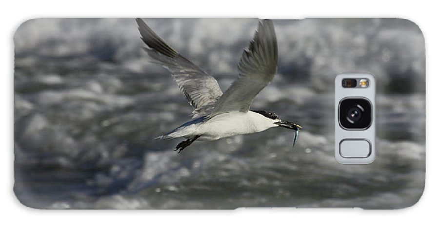Sandwhich Tern Galaxy S8 Case featuring the photograph Sandwhich Tern Flies Over Stormy Waves by Barbara Bowen