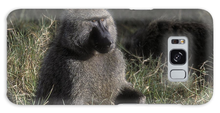 Baboon Galaxy S8 Case featuring the photograph Savannah Olive Baboon by Sandra Bronstein