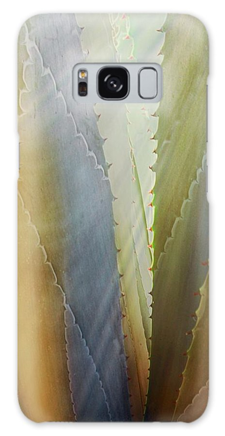 Nature Galaxy Case featuring the photograph Sawtooth Agave Gold Light by Zayne Diamond Photographic