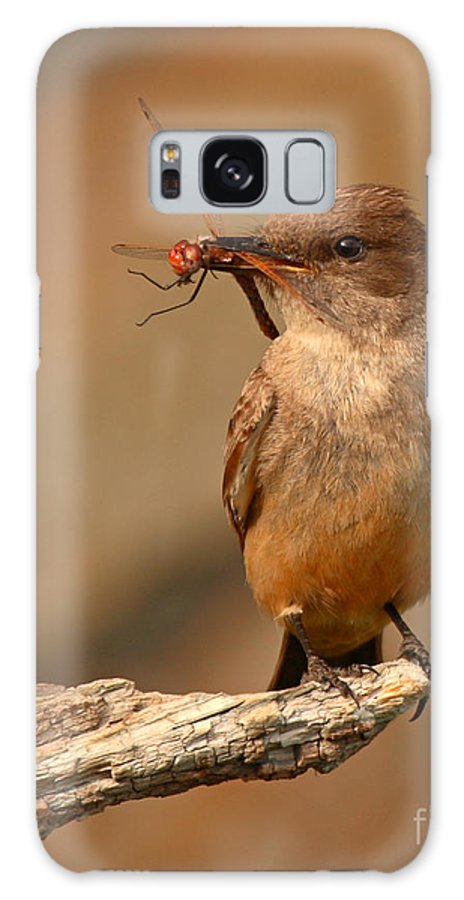 Say's Phoebe Galaxy S8 Case featuring the photograph Say's Phoebe Pausing With Freshly Caught Red Dragonfly In Beak by Max Allen