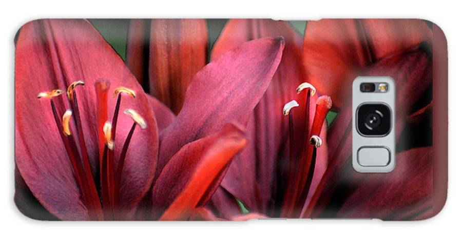 Scarlet Galaxy S8 Case featuring the photograph Scarlet Lilies by Kathleen Stephens