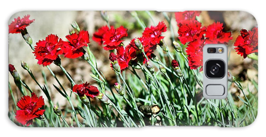 Dianthus Galaxy S8 Case featuring the photograph Scarlet Red Dianthus by Teresa Mucha