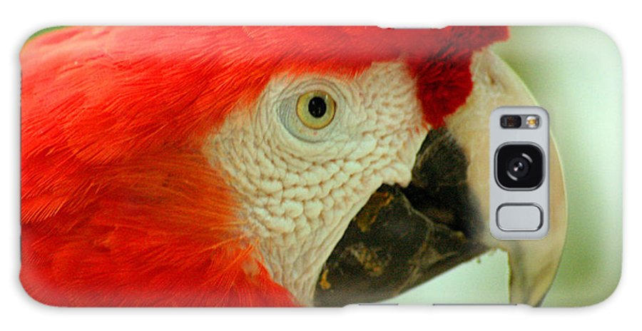 Parrot Galaxy Case featuring the photograph Scarlett Macaw South America by Ralph A Ledergerber-Photography