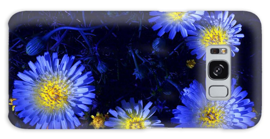 Daisy Galaxy S8 Case featuring the photograph Scintillating Daisies by James Carr