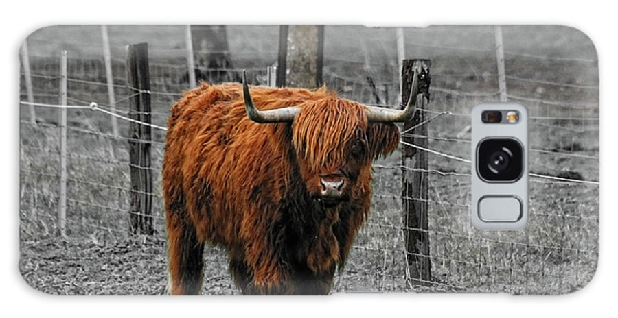 Cattle Galaxy S8 Case featuring the photograph Scottish Highlander by Douglas Barnard