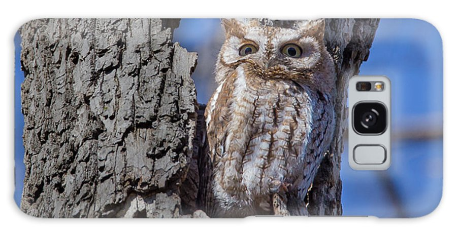 Lake Park Galaxy S8 Case featuring the photograph Screech Owl #1 by Paul Schultz