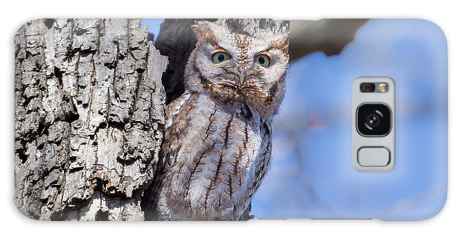 Lake Park Galaxy S8 Case featuring the photograph Screech Owl #2 by Paul Schultz