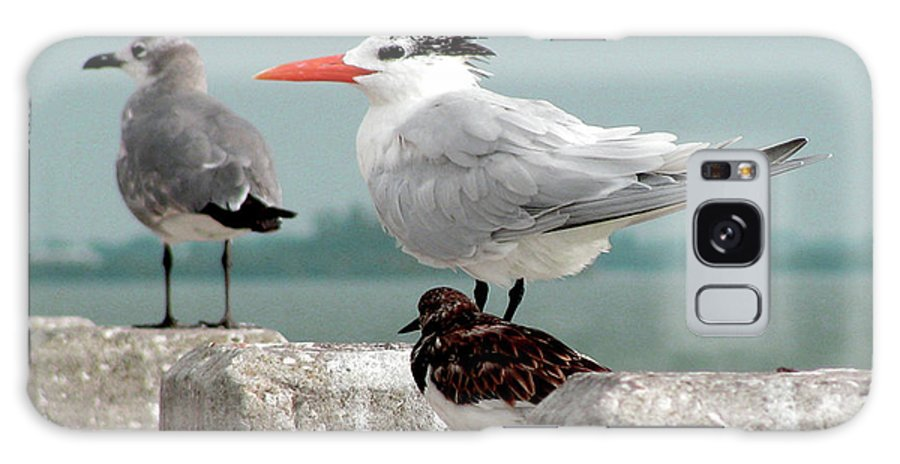 Birds Galaxy S8 Case featuring the photograph Sea Birds by Donna Brown