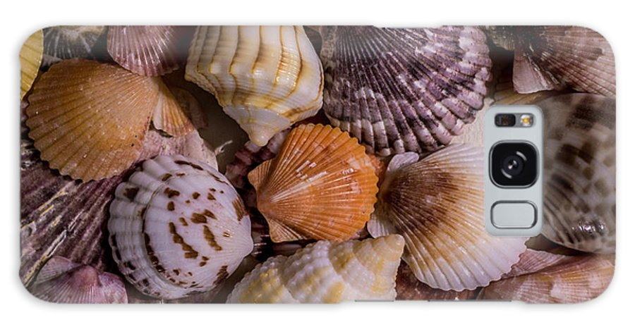 Sea Shells Galaxy S8 Case featuring the photograph Sea Bones 19 by Robbie Lyle