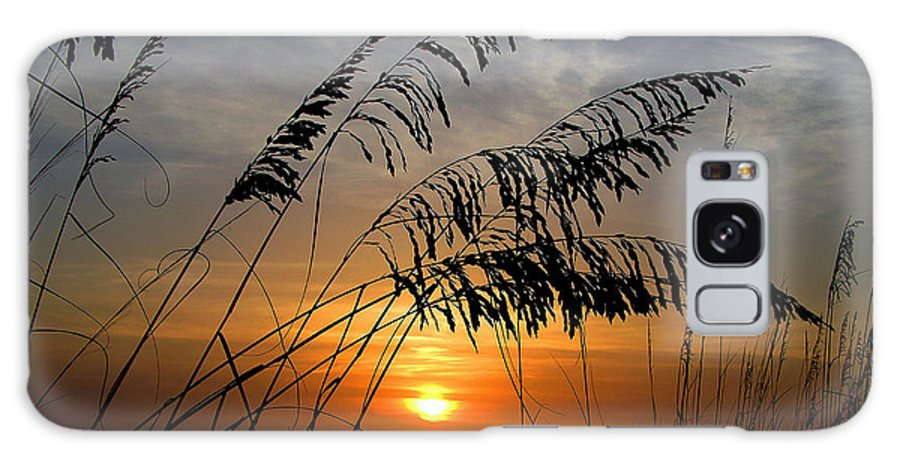 Sea Oats Galaxy S8 Case featuring the photograph Sea Oats by Dan Wells