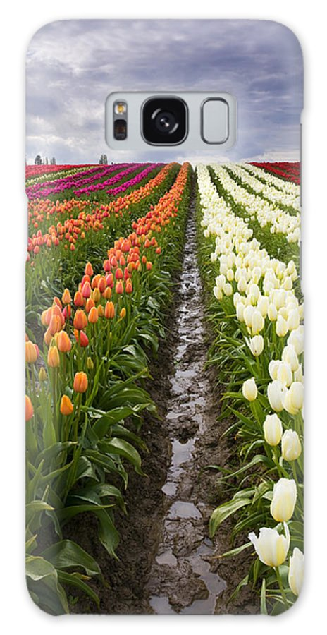 Tulips Galaxy S8 Case featuring the photograph Sea Of Color by Mike Dawson