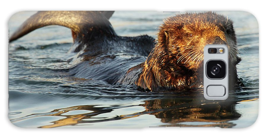 Natural Galaxy S8 Case featuring the photograph Sea Otter A Bit Embarrassed by Max Allen