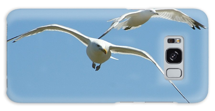 Galaxy S8 Case featuring the photograph Seagull Doubles by Barbara S Nickerson