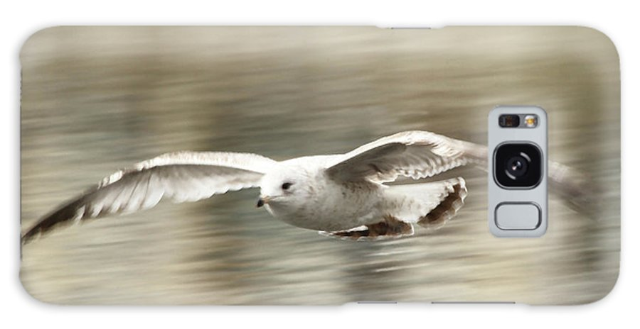 Seagull Galaxy S8 Case featuring the photograph Seagull Glide by Karol Livote