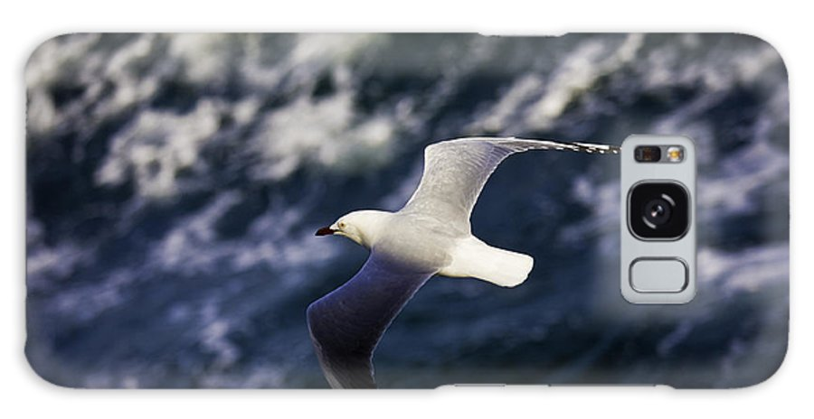 Seagull Galaxy Case featuring the photograph Seagull In Wake by Sheila Smart Fine Art Photography