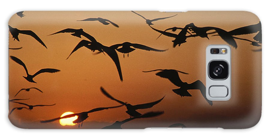 Birds Galaxy S8 Case featuring the photograph Seagulls In Sunset by Carl Purcell