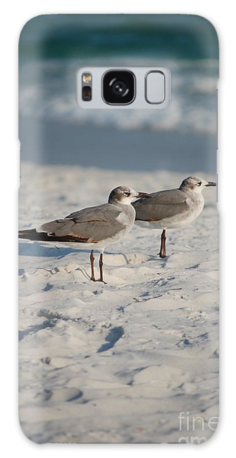 Seagulls Galaxy S8 Case featuring the photograph Seagulls by Robert Meanor