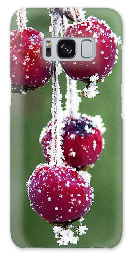 Berries Galaxy S8 Case featuring the photograph Seasonal Colors by Marilyn Hunt