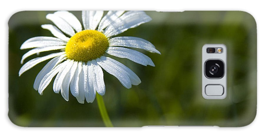 Daisy Galaxy Case featuring the photograph Searching For Sunlight by Idaho Scenic Images Linda Lantzy
